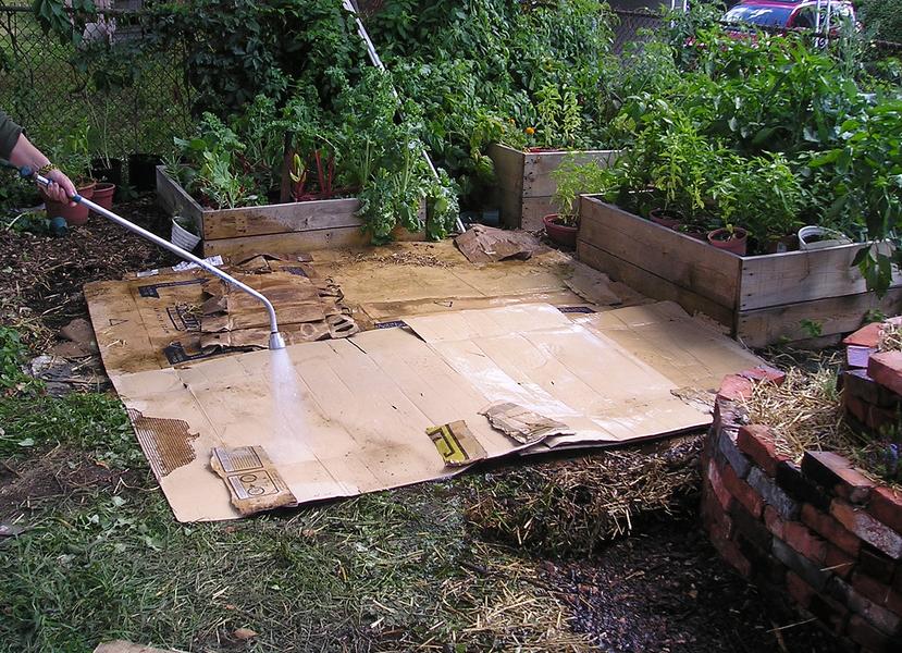 cardboard in garden